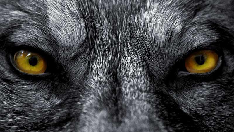 Il lupo e l'agnello. Di bombe, missili, crimini e criminali che perdono il pelo ma non il vizio. Proprio come il lupo di Fedro.